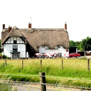 The Red Fox, in Avebury