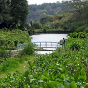 Trebah Garden, Cornwall - The lower garden