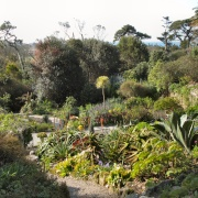 A view in the Abbey Garden, Tresco