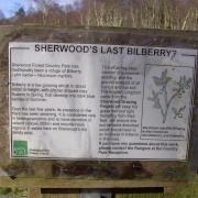 Bilberry, Sherwood Forest, Mansfield, Nottinghamshire