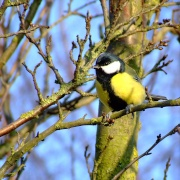 A friendly bird, North Cave, East Riding of Yorkshire