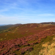 Heather on the slopes of Moel Famau