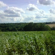 Chess Valley, Little Chalfont