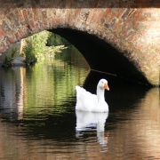 'Duck' under the bridge?