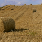 A field of Hay Bales