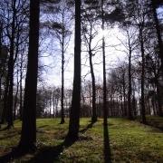 Queenswood Country Park (NT)