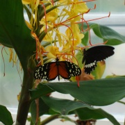 In the Butterfly House, Williamson Park