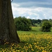 swinger in beverley east riding yorkshire