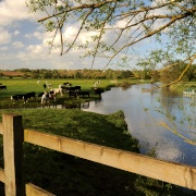 Rural tranquillity along the River Stour
