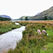 Warnscale Beck flowing into Buttermere