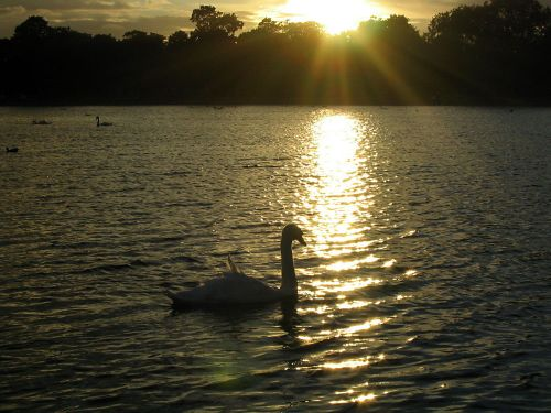 Sunset over the Serpentine, Hyde Park, London