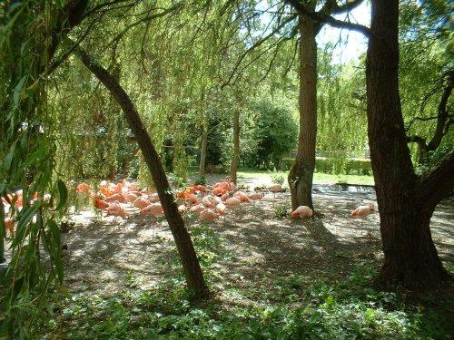 The flamingos at Flamingo Land Theme Park & Zoo