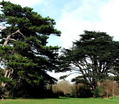 Another lovely view of Royal Victoria Country Park, Netley, Hampshire