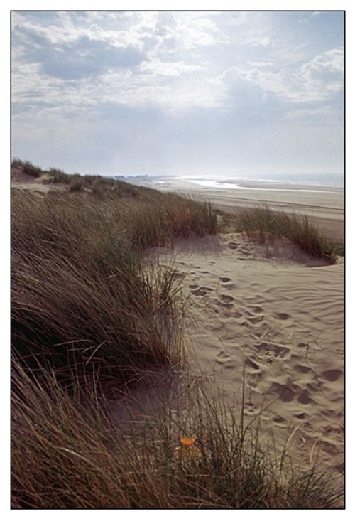 Beach at Camber, East Sussex