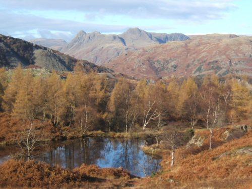 Holme Fell near Coniston, Langdale Pikes in the background, Lake District, Cumbria.
