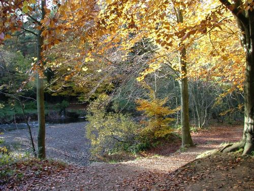 A picture of Hamsterley Forest