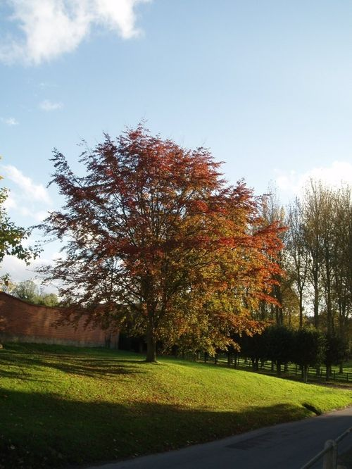 Beautiful tree between Hendred House and the village stores in East Hendred, Oxfordshire