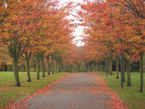 Fall in Stoke-on-Trent, Staffordshire