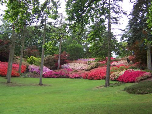 Punch Bowl, Valley Gardens...Great Windsor Park