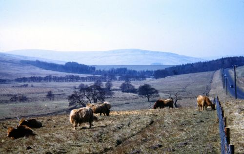 A picture of Redesdale