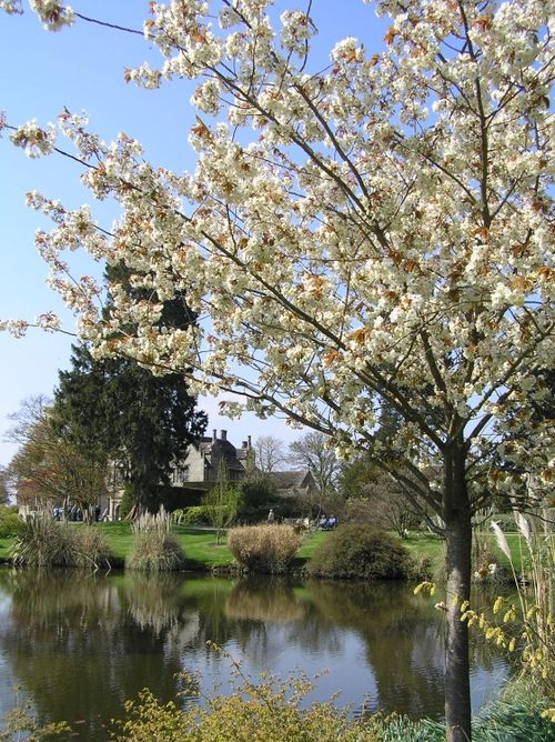 Spring blossom at Wakehurst Place, Kew's garden in the East Sussex countryside near Ardingly