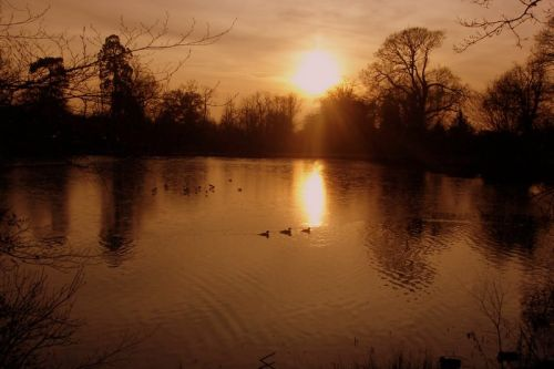 Lake in Danbury Park, Chelmsford, Essex, at dusk