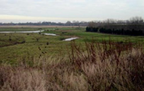 Horsham Marshes, behind Woodruff Close-Upchurch, Kent. Looking towards the River Medway.