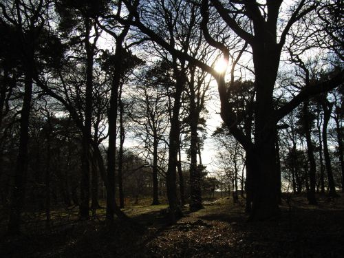 Beacon Hill Country Park, Leicestershire