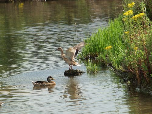 Wildlife at Waters Edge Country Park, Barton upon Humber, Lincolnshire