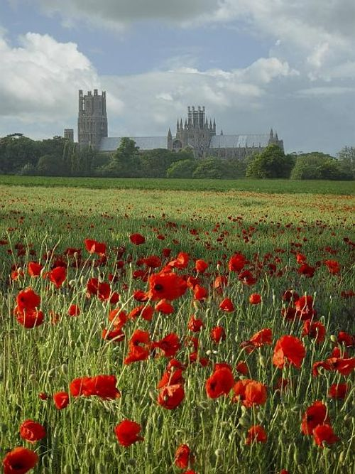Ely Cathedral across the fields