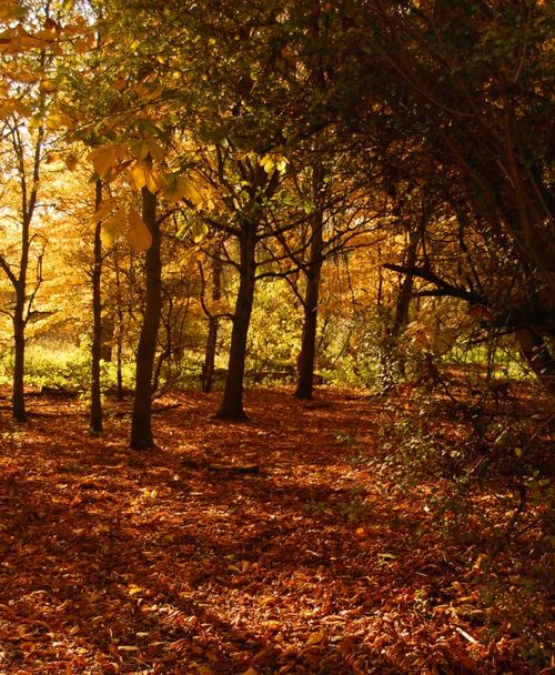 Autumn in the woods at Kingsbury Water Park, Warwickshire