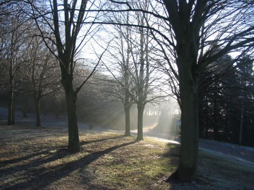 Winter Sunshine at Fairlands Valley Park