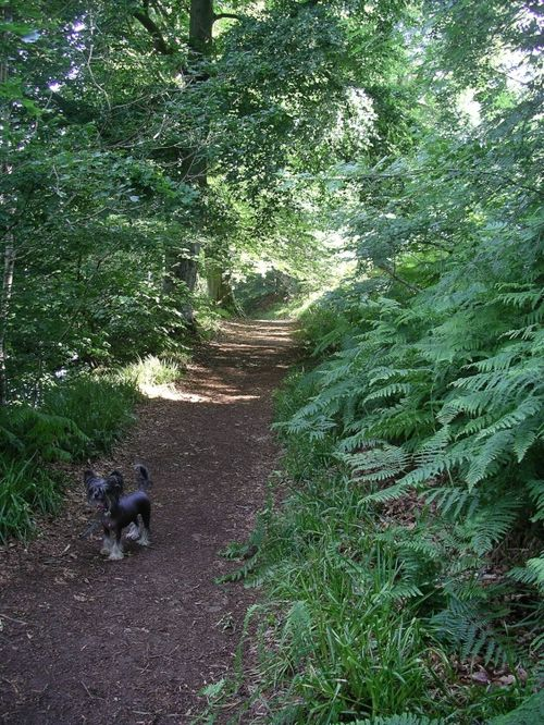 River Eden footpath, Armathwaite, Cumbria