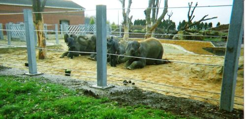 Elephants, Twycross Zoo, Leicestershire