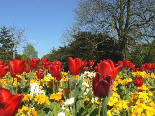 Spring bulbs in Greenwich Park, Greater London
