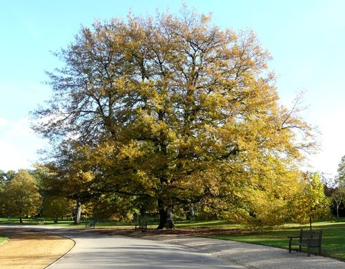 Tree in Dulwich Park, Greater London