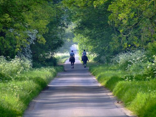 A gentle walk down a country lane, Bishop Burton, East Riding of Yorkshire