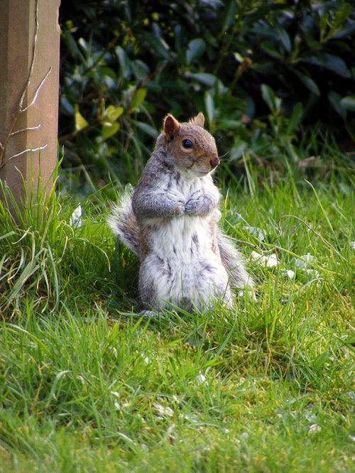 Squirrel, Great Yarmouth, Norfolk