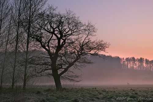 Dawn at Long Hanborough, Oxfordshire