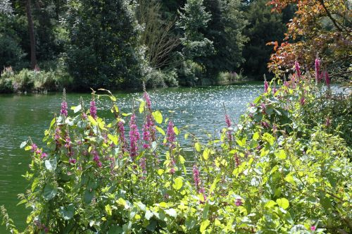 A tranquil view over the lake at Elsham Hall Country Park