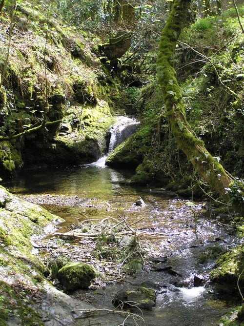 A stream tumbles down to join the river in Lydford Gorge, Devon
