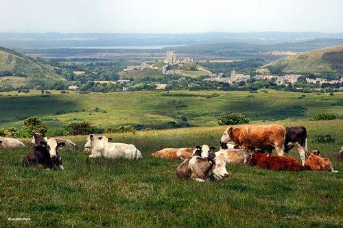Kingston in Dorset