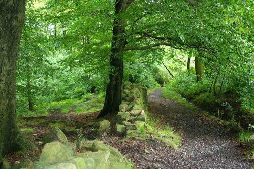 Through Mill Wood