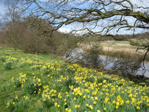 Attingham Park in Spring