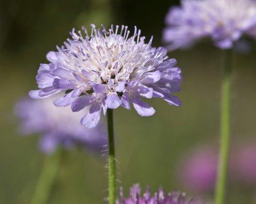 Wild flowers on the heath