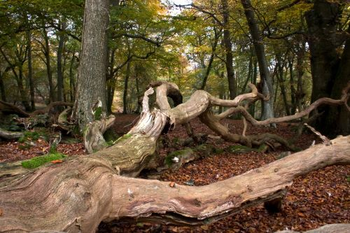 Autumn in The New Forest