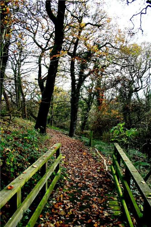 Woodland Walk at the centre
