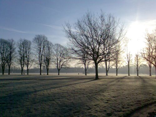 Early morning frost in the park