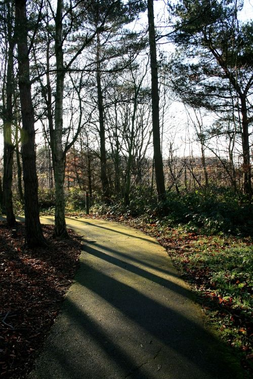 Woodland Walk, afternoon shadows