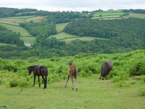Lovely horses in beautiful landscape